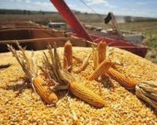 RS adia cobrança de ICMS de milho do Mercosul