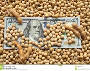Fortalecimento do Dólar