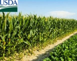 USDA mantém estoques finais de soja e reduz estoques de milho da safra
