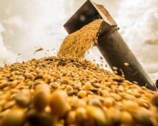 SOJA - Oferta e Demanda do USDA (Departamento de Agricultura dos EUA)