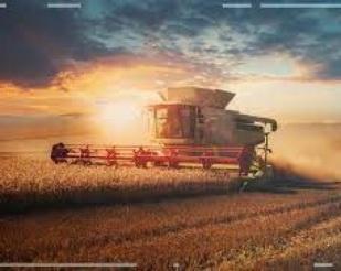 Colheita de soja alcança 85%
