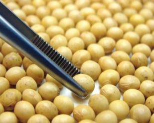 China altera limite da umidade de grãos de soja